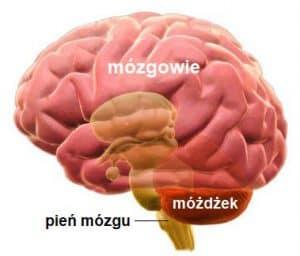 Uszkodzenia mózgu noworodka